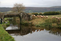 Highlight for Album: Brecon Canal 2008/2009